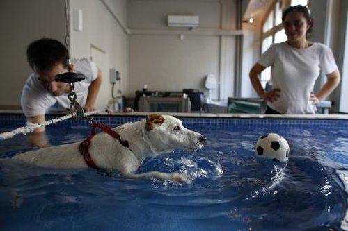 Rééducation canine en piscine
