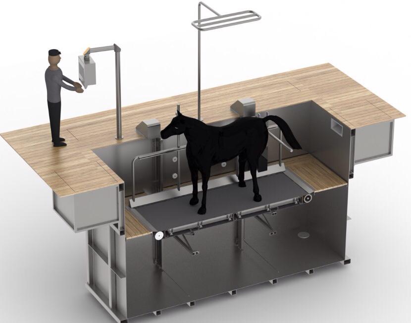 Rééducation pour chevaux